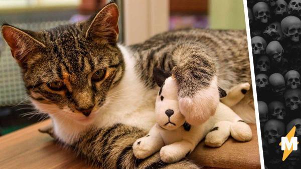 Кот похвастался перед хозяевами добычей, но как только они увидели, что принёс , поняли: время звонить копам