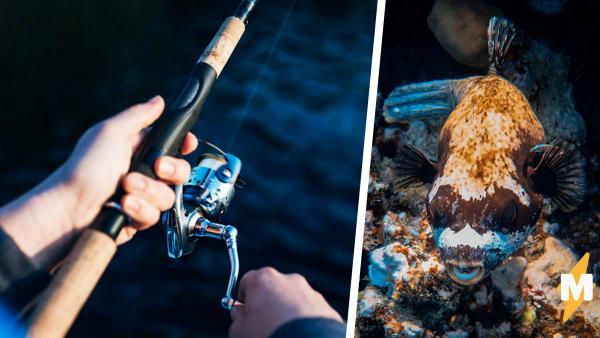Рыбак поймал в реке зомби, но эксперты успокоили. Природа не породила монстра, рыба жила вопреки её законам
