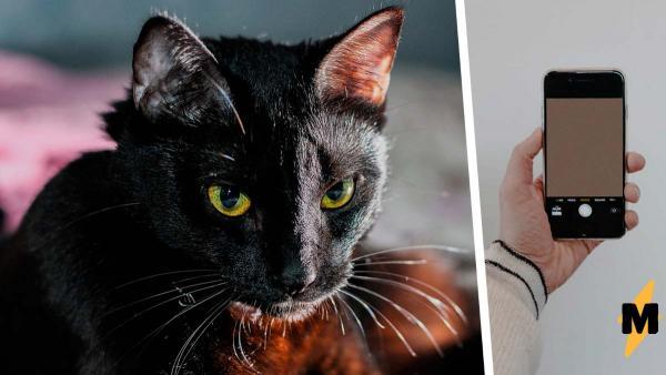 Хозяин сфоткал кота, но зря использовал фронталку. Глаза зверя показали, какие сущности скрываются в питомцах