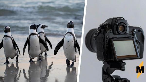 Любители животных решили посмотреть трансляцию с пингвинами, но вместо умиления получили тревогу