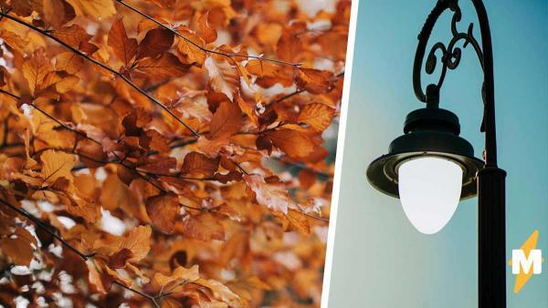 Дерево росло рядом с фонарём, и его листья сломали законы природы. Правда, секрет чуда не удивляет, а огорчает
