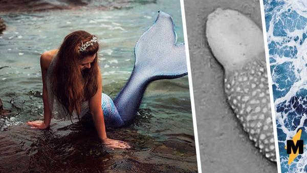 Если бы русалки существовали, их язык был бы таким. Море вымыло нечто, доказавшее: природа удивительна