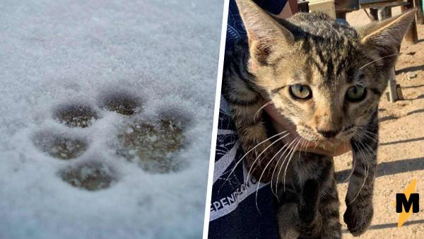 """Девушка спасла котёнка и за два месяца изменила его и его жизнь. Вид кота """"после"""" - лучший повод для радости"""