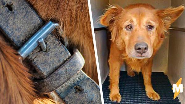 Собака попала в приют и сразу же обрела семью. Удивительно, но с новым хозяином пёс был знаком в прошлом