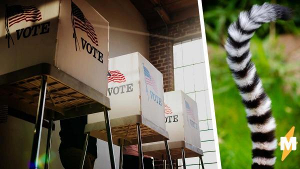 Жители американского поселения выбрали мэра и очень довольны результатом. Ещё бы, ведь он хороший мальчик