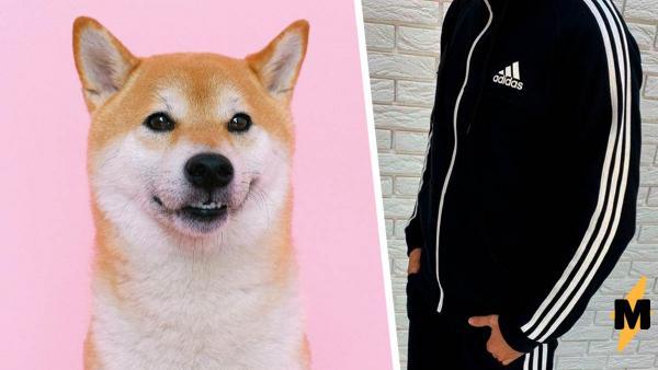 Иностранцы шутят над любовью россиян к спортивным костюмам. Ведь мем с псом в Adidas будто бы создан для этого