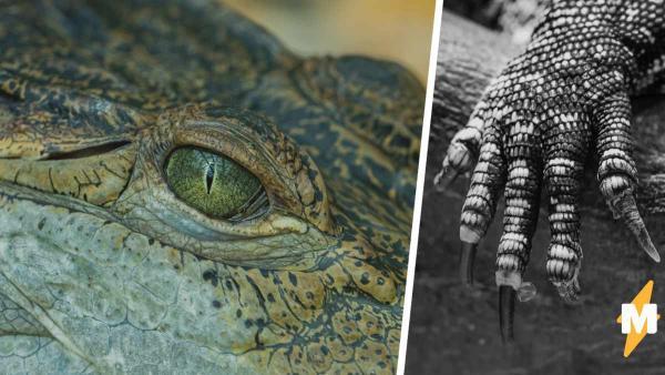 Люди думали, что динозавры давно вымерли. Но видео с гигантом-аллигатором заставило их в этом усомниться