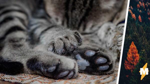Кошка прибилась к старушке в деревне и стала домашней. Но люди боятся за жизнь новой хозяйки из-за вида кисули