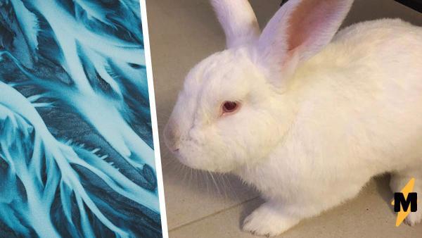 Девушка показала на фото, как изменяется окрас кролика в холоде и тепле. И это не магия, а обычная биология
