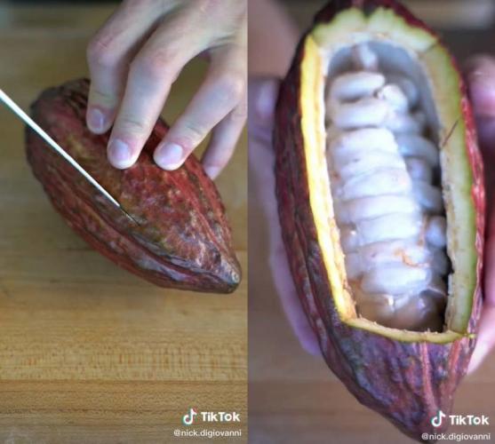 Парень показал, что внутри плода какао-дерева. Сладкоежки уверены: больше есть шоколад они не будут (и зря)
