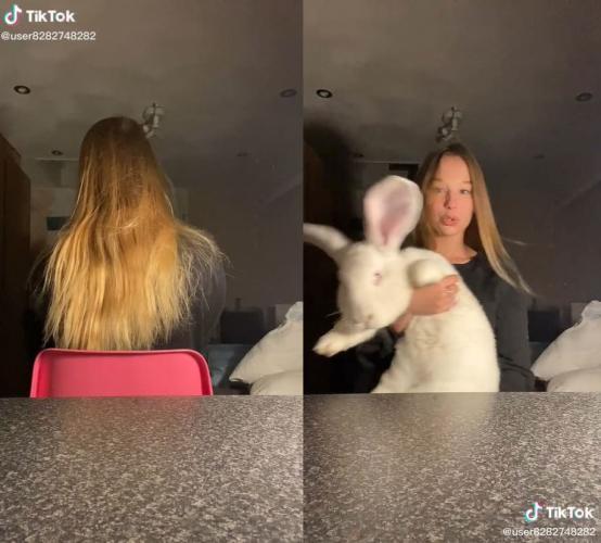 Зря вы думали, что кролики не могут пугать. Девушка одним видео это опровергнула (спасибо гиганту-пушистику)
