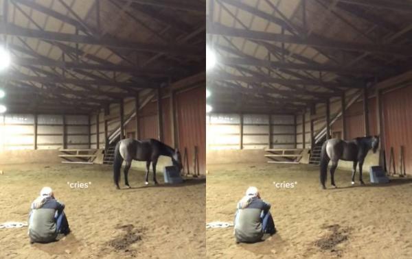 Девушка притворилась грустной рядом со своей лошадью. Но такой эмпатии от коня любители фауны не ожидали