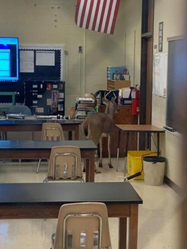 Ученики не могут вернуться в школу, но дистанционка тут не причём. Школу сломал какой-то олень, буквально