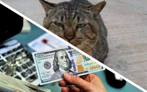 Кот пропал на три дня, и хозяин не находил места. Но питомец нашёл, и так там оторвался, что разорил двуного