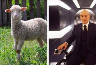 На ферме родился ягнёнок, и пора звать профессора Икс. Такой мутант с лицом человека вписался бы в его команду