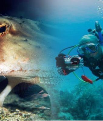 Натуралист встретил ходячую рыбу с красными губами. Это не начало анекдота, а идеальное существо для мемов