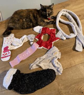 Кошка Ки-Ки заставляет краснеть хозяйку каждый день. А как иначе, когда привычка питомца лишает соседей