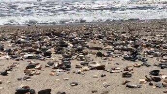 Ракушку с биркой прибило к берегу и её подобрал прохожий. Находка оказалась путешественницей со стажем