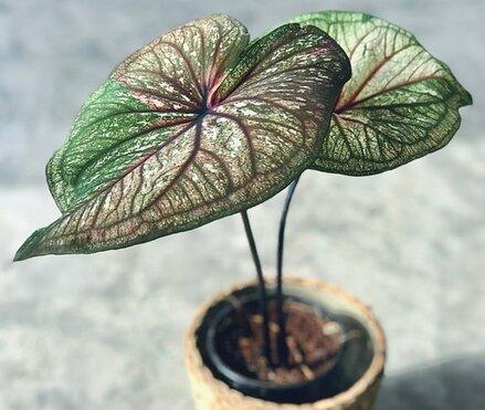 Девушка купила комнатное растение и нашла в горшке крипоту. Кажется, лайфхаки садоводов зашли слишком далеко