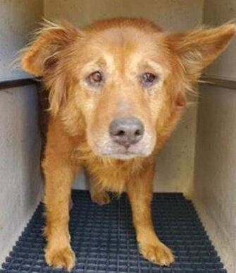 Собака попала в приют и сразу обрела любящую семью. Удивительно, но с новым хозяином он уже был знаком