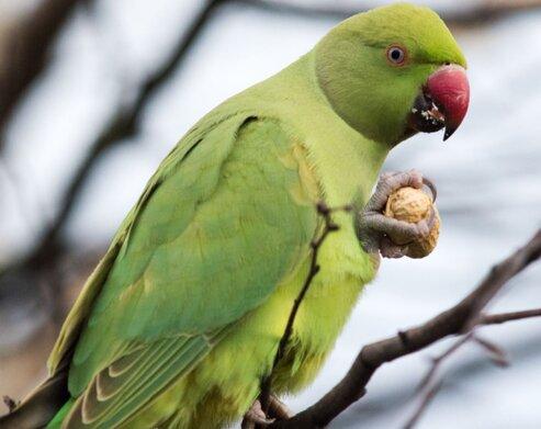 Попугай-крикун разбудил хозяина ночью, но ему за это ничего не было. Ну, кроме признания и благодарности