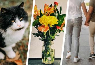 Ваза или парни, готовые поцеловаться? Хозяйка показала кота, а люди сломались об оптическую иллюзию его окраса