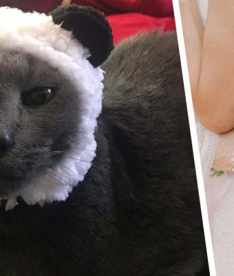 Сестра не позвала брата на свадьбу из-за его отношения к коту. Узнав историю питомца, люди защищают парня