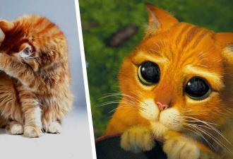 Хозяйка не знала, как кот ей манипулирует, пока не увидела его глаза. Подчинять людей он научился у мастера