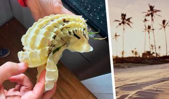 Женщина подобрала странный предмет на пляже, но вскоре пожалела. Не стоит трогать всё непонятное в Австралии