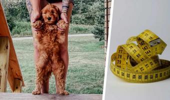Девушка показала, как изменился щенок за три месяца. Кажется, у пса есть секрет, узнать который мечтают многие