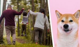 Бабуля с дедулей взяли мопса на первую встречу с правнуком (зря). Улыбка пса показала, кто любит дитя больше