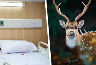 Чудак стал считать себя оленем и оказался в больнице. Беды с башкой ни при чём — просто ему поверили охотники
