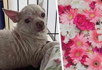 Угадайте, как этот грустный пёс выглядит после спасения. Фото уже есть, но вы не поверите глазам