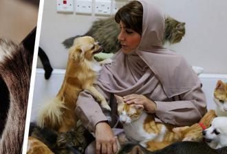 Женщина не любила животных, а сын подарил ей кота. И узнал маму с новой стороны — теперь с ней живут 500 кошек