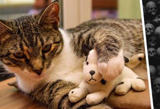 Кот похвастался перед хозяевами добычей и попал на радар полиции. Его находку оценил бы только Дэвид Линч
