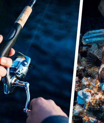 Рыбак поймал в реке зомби, но эксперты успокоили. Природа не породила монстра — рыба жила вопреки её законам