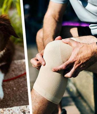 Мужчину вела дорога приключений, но его псу это не понравилось. Питомец остановил хозяина выстрелом в колено