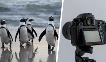 Люди хотели увидеть пингвинов и словили тревогу. Вместо милоты им пришлось наблюдать трагедию мирового уровня