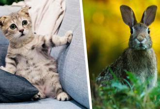 Дочь показала маме, как кот играет с кроликом, и травмировала её. Увидев, кем был грызун, женщина закричала
