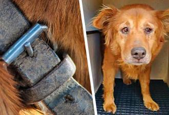Один звонок сделал из грустного бродяги счастливого барбоса. Пёс примером показал, зачем питомцам микрочип