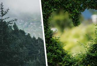 Спасатели летели на миссию и попали в сказочную реальность. Внизу сам лес открыл им своё сердце