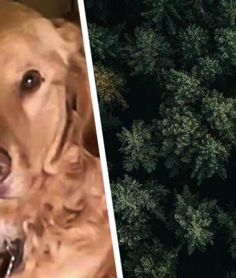 Хозяйка потеряла пса в лесу, но не опустила руки. Через год он доказал: собачья верность сильнее Беара Гриллса