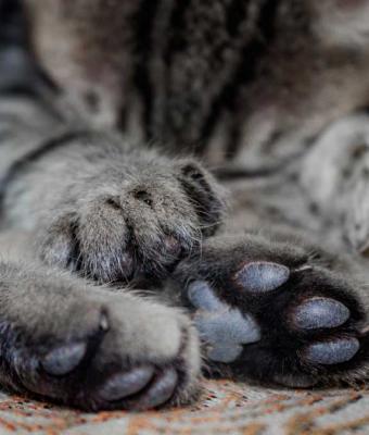 Кошка прибилась к старушке в деревне и стала домашней. Но люди увидели фото питомца и боятся за жизнь хозяйки