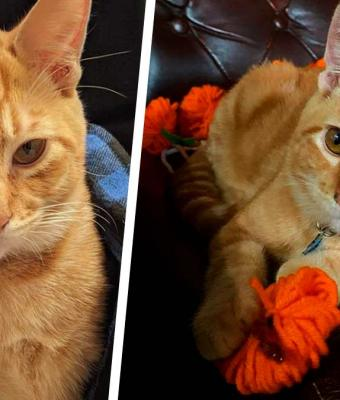 Хозяйка научила кота говорить с помощью современных технологий и пожалела. Питомец доказал: все кисы — вредины