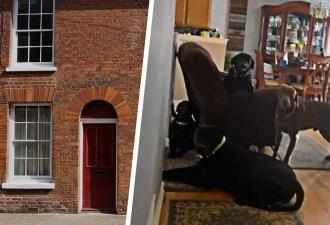Хозяйка узнала, что четыре лабрадора делают в одиночестве дома. И поняла, почему соседи её недолюбливают