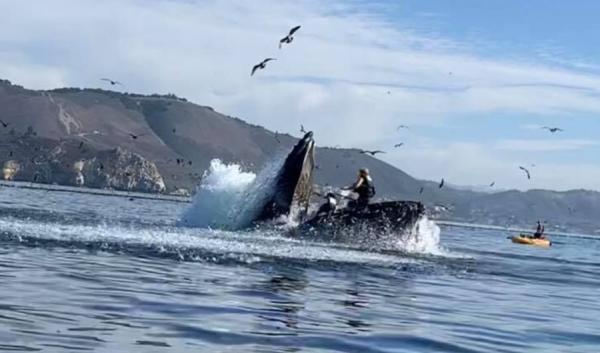 Люди увидели, как кит едва не проглотил девушек на лодке. Новая фобия уже здесь, и это видео - её амбассадор