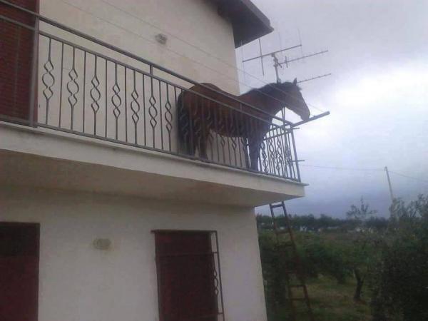 Зашла как-то лошадь на балкон и стала мемом. Конь Хуан - амбассадор упоротости, и не пытайтесь его понять