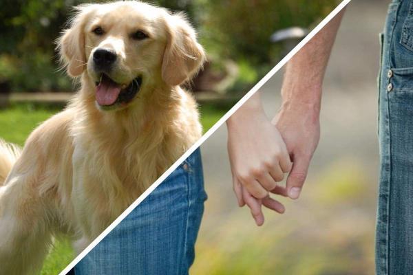Девушка обхитрила парня, чтобы принести домой собаку (зря).Ведь вернувшись она обнаружила двойника пёселя