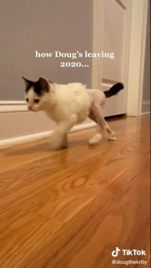 Девушка подобрала кота с больными лапками.