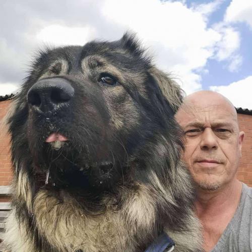 Хозяин завёл пса и превратился в коротышку. Глядя на размеры этого оборотня, сложно сказать, кто чей питомец